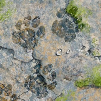illustration by John Fraser of rock terrain with wet pawprints, pawprints, animals, footsteps, rough terrain, rock landscape